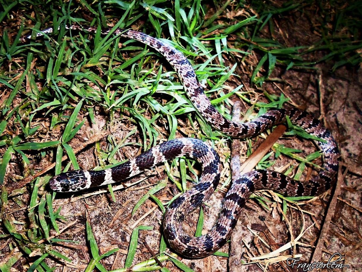 Dormideira, sleep snake