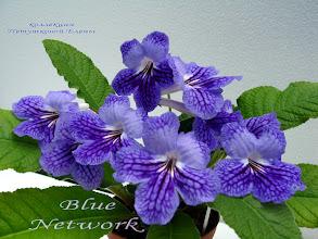 Photo: Blue Network