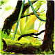 Mossy Forest Live Wallpaper icon