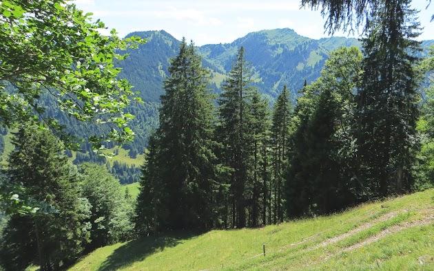 Unterhalb Alpe Sattel Blick Trettachspitze und Mädelegabel Nagelfluhkette Allgäu