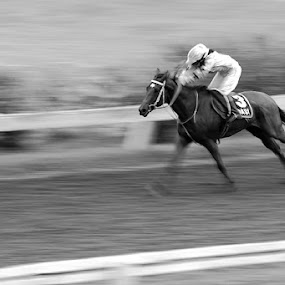 Racing Horse by Donny Louis - Sports & Fitness Other Sports