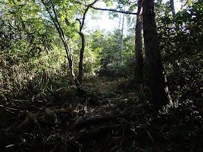 樹林や笹に覆われ展望は無し