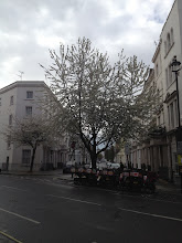 Photo: Spring blossoms in London
