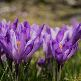 by Gino Libardi - Flowers Flowers in the Wild ( flower photography, flowers, flower macro, flower closeup, flower )