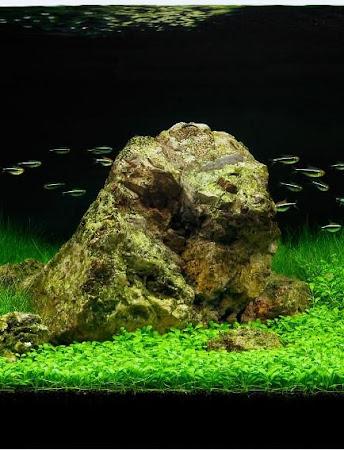 Aquascape Design 1.8 screenshot 2085754