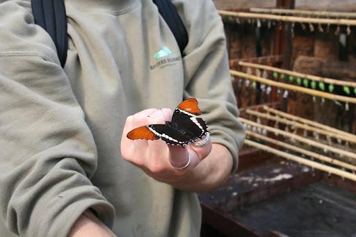 Sightseeing Randers Regnskov 2005