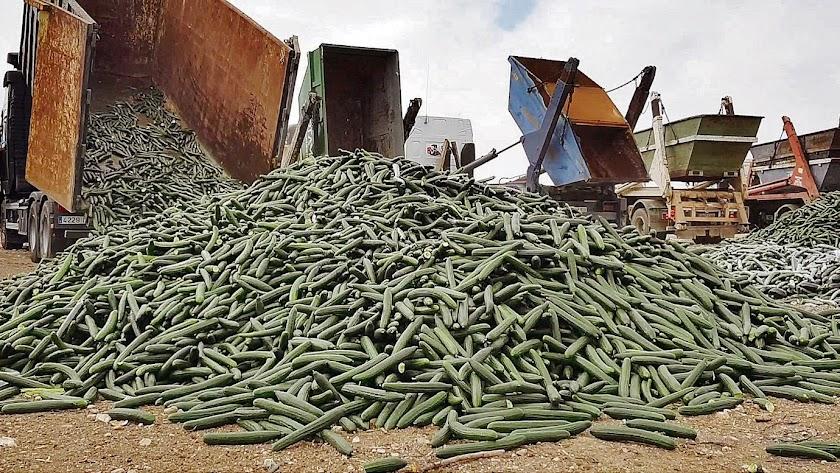 Cada año se destruyen en Almería alrededor de 13 millones de kilos de productos hortofrutícola.