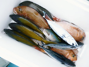 Photo: 釣果でーす。 戸田さんのクーラーBOX ウメイロ、マダイ、クロ・・・