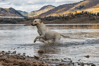 Photo: The mighty dog returns with the stick