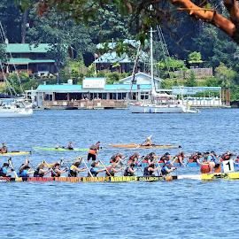 Dragon Boat Race by Carol Leynard - People Group/Corporate ( oars, rowing, race, canoes, men, dragon boats, boats, water, women )