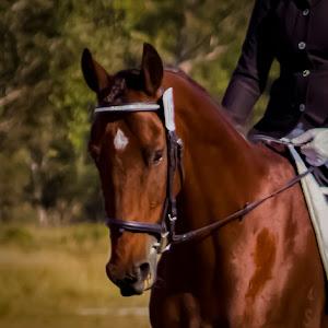 MAJESTIC HORSE.jpg