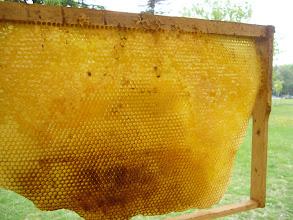 Photo: Cadre à miel