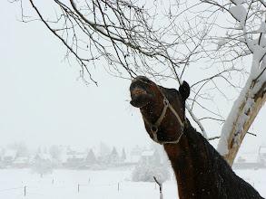 Photo: Emulsja czy żyrafa?