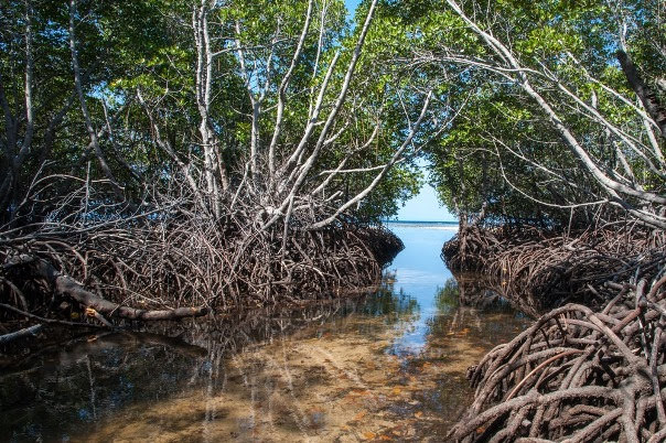 Nusa Lembongan, Mangrove Forest