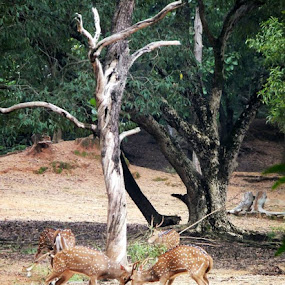 The day's fight by Satabdi Datta - Animals Other Mammals (  )