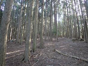 広い緑林帯を進む