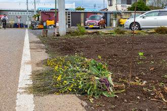 Photo: Pile of pulled up plants on the roadside, Ōizumi, Ōra District, Gunma Prefecture. Read more about Oizumi: http://japanvisitor.blogspot.jp/2015/04/oizumibrazil-in-japan.html