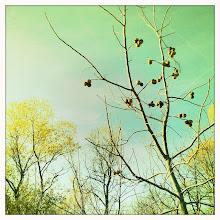 Photo: walnuts