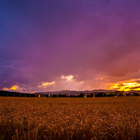 wheat field at sunset by Jernej Lipovec - Landscapes Prairies, Meadows & Fields ( clouds, field, wheat, warm, colorful, sunset, summer, storm, evening, rain )