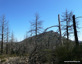 Photo: Remnants of a burn in the Cuyamaca Mountains of Southern California