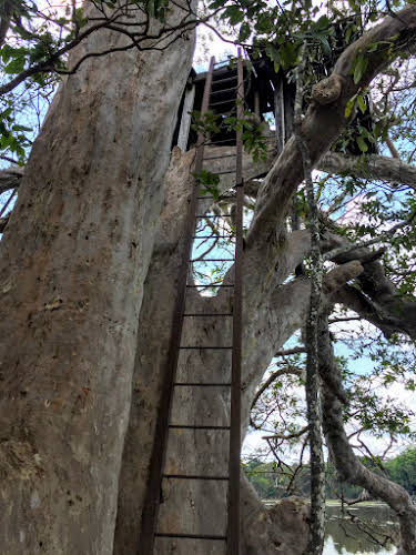 Sri. Lanka Wilpattu National Park. Ladder up the observation treehouse?