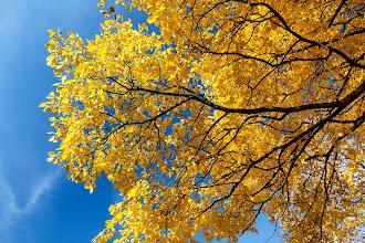 Photo: Autumn blue sky high  #autumn #sky #blue #yellow #orange