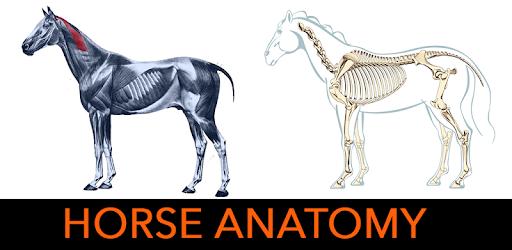 Horse Anatomy Diagrams : Equine Anatomy – Apps bei Google Play