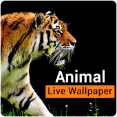 Cute Animal Live Wallpaper - Animal Gif Wallpaper