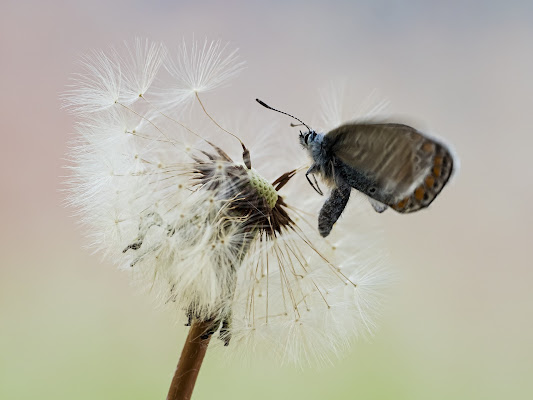 landing di fabio_sartori
