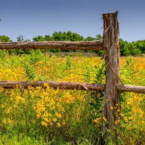 Texas Wildflower by John Chitty - Landscapes Prairies, Meadows & Fields ( wildflowers, fence, nature, texas, fields,  )