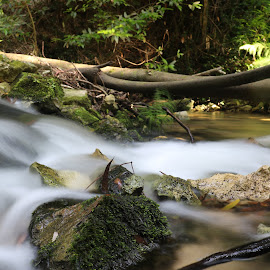 Waters by Gil Reis - Nature Up Close Water ( places, nature, woods, bio, forests, life )