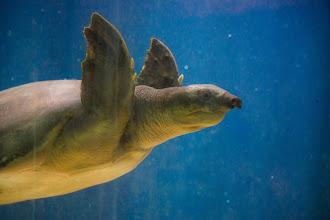 Photo: W59.22XS Struck by turtle, sequela