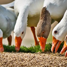 by Rodolfo Alar - Animals Birds