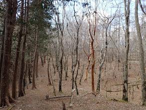 気持ちの良い自然林に