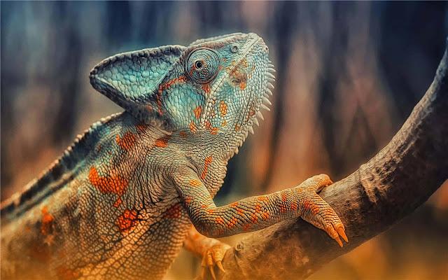 Chameleon Themes & New Tab