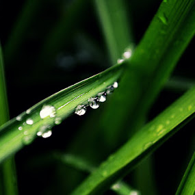 Raindrop.  by Riley Abriam - Nature Up Close Leaves & Grasses ( #raindrop #leaves #nature )