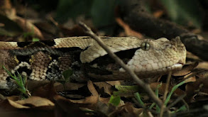 Snakes of Africa thumbnail