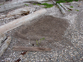 Photo: A level area smoothed out for the tent on a sloping gravel beach.
