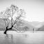 Wanaka 3 by Mark Anolak - Black & White Landscapes ( waterscape, tree, black and white, lake, new zealand )