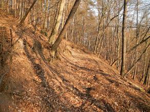 Photo: Lesní cesta s obnaženými sedimentárními horninami (13.1. 2014).