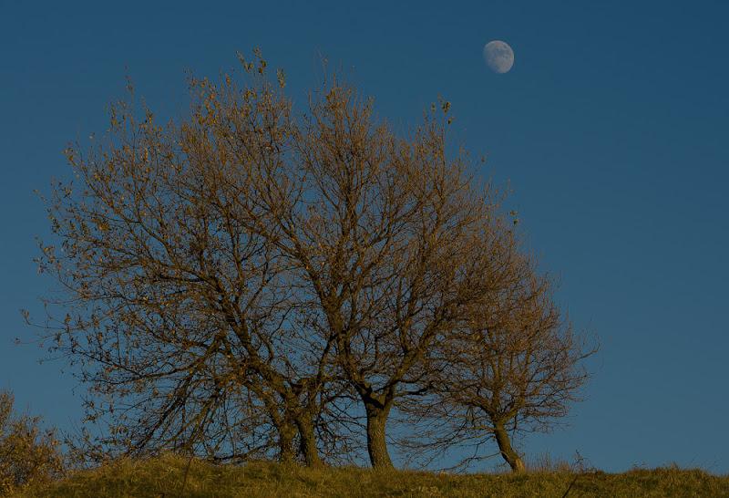 Four.....Tree!!!  di utente cancellato