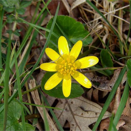 yellow spring di alexpazzaglia
