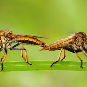 KAWINAN by B Iwan Wijanarko - Animals Insects & Spiders