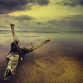 triangulation by Arief Siswandhono - Landscapes Waterscapes