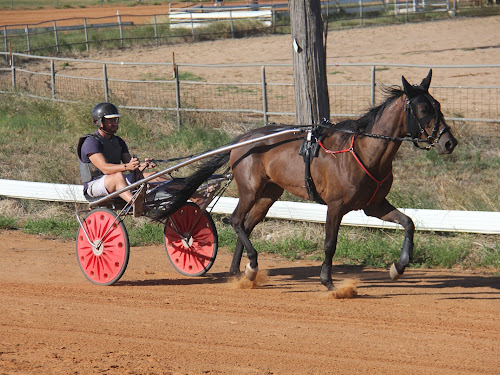 Narrabri harness racing driver Chris Shepherdson puts Capital Cullect through a training run last week. Shepherdson drove the Peter Shepherdson-trained Kid Montana to a win in Armidale on Sunday.