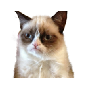 Grumpy Cat HD Wallpapers and New Tab
