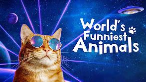 World's Funniest Animals thumbnail