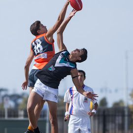 Contesting the ball. by Peter Cannon - Sports & Fitness Australian rules football ( canon, australian rules football, football, australia, sport, victoria, afl, compete )