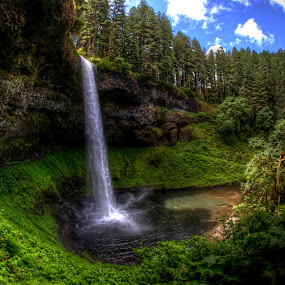 Silver Falls State Park by Chip Bolcik - Landscapes Forests