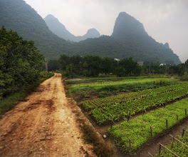 Photo: Gardens in the Mist - Li River Valley in China  The Li River valley is a beautiful and serene area of southern China that's green, alive, and mysterious.  The verdant limestone cliffs cover the landscape and give everything an ethereal feel.  After a trip down the river, I got off the boat and decided to hike back to the little village where I was staying.  Along the way, I decided to hike down a side-road that went off into these little family-run farms.  I set up for a shot on this quiet dirt road.  from the blog www.stuckincustoms.com